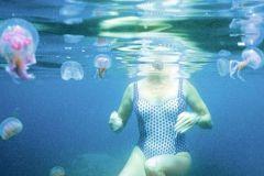 Schwimmen mit Quallen